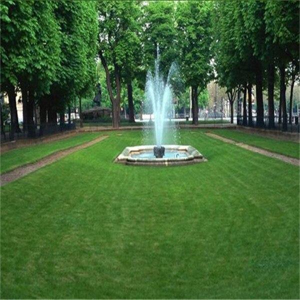 300-Pcs-Japanese-Forest-Grass-lawn-Perennial-Evergreen-Lawn-bonsai-plant-Beautiful-Garden-Ornamental-Plant-Easy (4)
