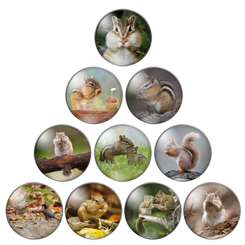Cute animal Squirrel 10mm/12mm/18mm/20mm/25mm Round photo glass cabochon demo flat back Making findings ZB0543