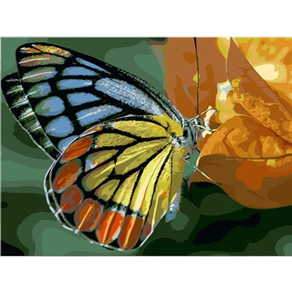 Flores de Amapola 16 20 Pulgadas WATAKA Pintura por N/úmeros para Adultos y Ni/ños DIY Kits de Pintura al /Óleo De Lona Preimpresos para la Decoraci/ón De La Casa