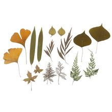 16Pcs Mix Pressed Leaves Plant Specimen Collection Resin Fillings Jewelry Making