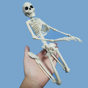 Image 5 - 5 Pcs Human Anatomy Skeleton Skeleton Model Medical Medicine Learning Aid Anatomy 1 Pair Skull Skeleton Hand Bone Halloween