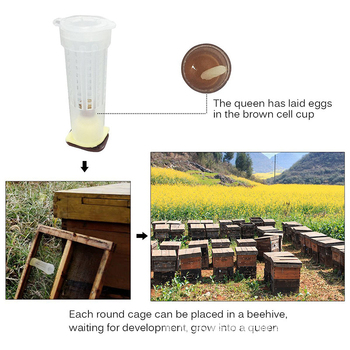 1PC Bees Tools Cages Anti-bite King Queen Rearing Cupkit System Bee Beekeeping Catcher Box Cell Cups Cage Nicot Kit Apicultura image