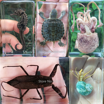 1piece Tortoise Specimen Sea Horse In Clear Resin Educational Explore Instrument School Biology Teaching Supplies 73x41x20MM