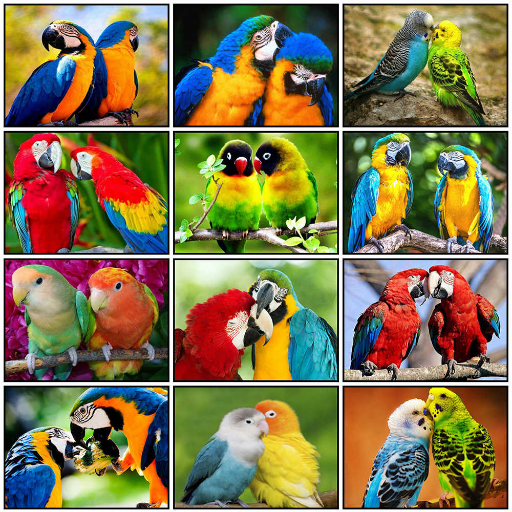 Evershine Full Square Diamond Painting Parrot Mosaic Diamond Embroidery Cross Stitch Animals Bird Home Decoration New Year Gift
