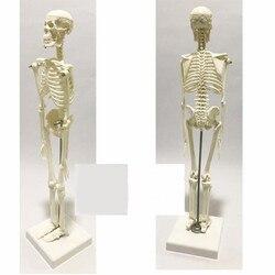 45 см оптовая продажа гибкий медицинский человек анатомический скелет модель человека анатомическая boneco игрушка в медицинских науках