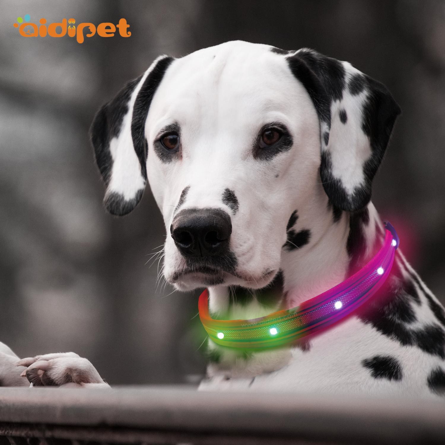 Original Factory New Style RGB Colorful Shiny Dog Collar Horse Race Lamp LED Color Changing Waterproof Neck Ring Pet Supplies