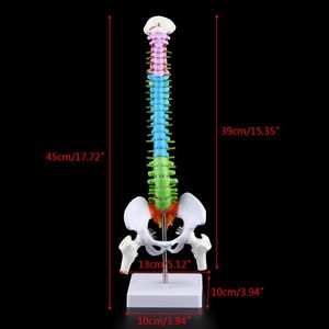 Image 5 - 45cm נשלף אדם עמוד השדרה דגם עמוד השדרה בחוליות המותני עקומת אנטומיים רפואי הוראת כלי