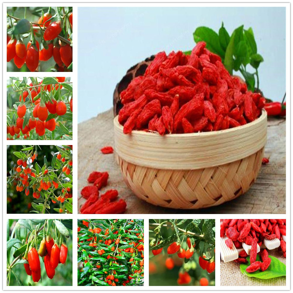 120Pcs Plant Goji Bath Salts Chinese Wolfberry Essence ZYYY-01