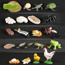 4 unids/lote animales ciclo de crecimiento de ciclo de vida modelo Rana hormiga de tortuga de mar de figuras de acción juguetes para los niños