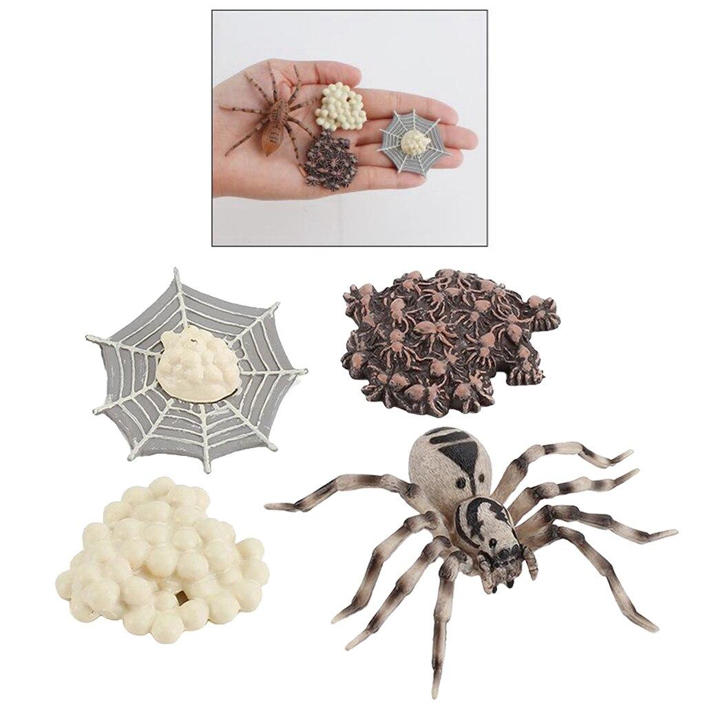 1 Set Spinne Leben Zyklus Stufen Den Unterricht Zubehör Pädagogisches Spielzeug für Kinder Student Lehrer Lehrmittel