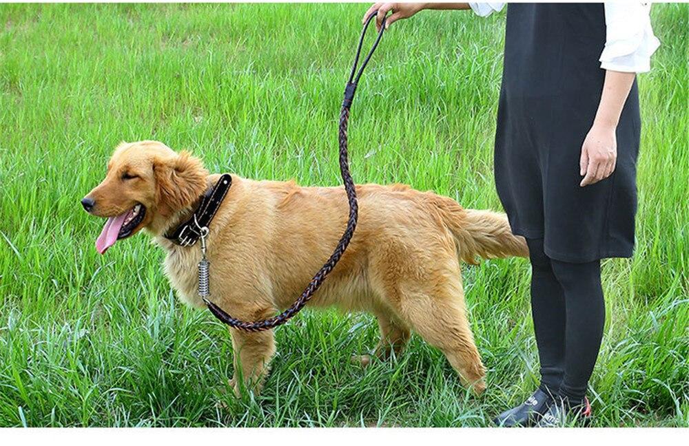 köpek tasması