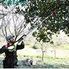 CE certificate orchard and garden electric pole pruner/ electric secateurs (forged blade)