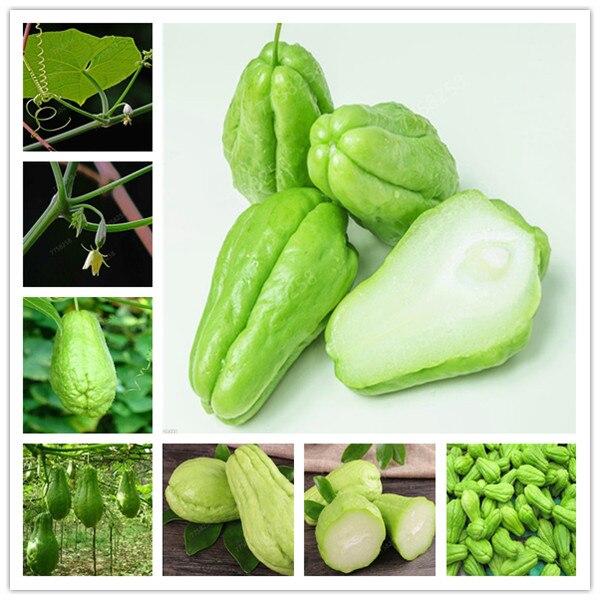 100 Pcs Delicious Chayote Penzai Vegetable Garden Penzai High-nutrition Pumpkin Perennial Health Vegetables Plants For Garden