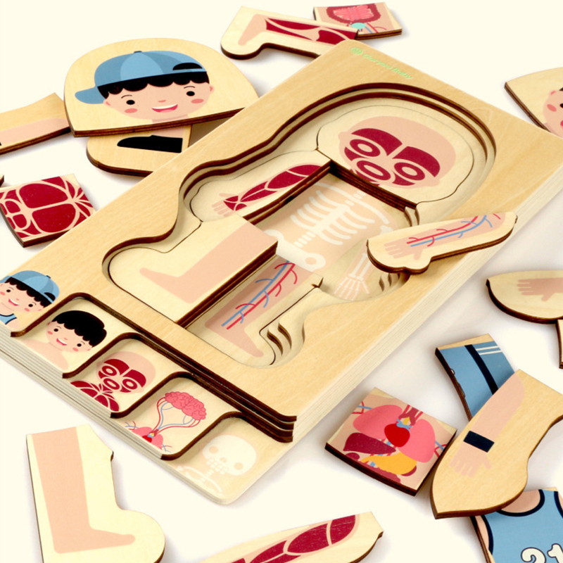 Montessori Educational Boys Girls Body Structure Puzzle Children Wooden Toys Puzzles Kids Early