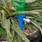 Automatic Watering D...