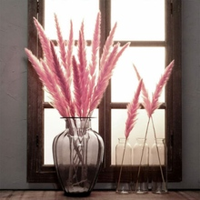 15PCs Bulrush Natural Dried Flowers Small Pampas Grass Phragmites DIY Artificial Flowers Plants For Decor Home Wedding Decor 50pcs real dried small pampas grass wedding flower bunch natural plants home decor dried flowers phragmites flower ornamental