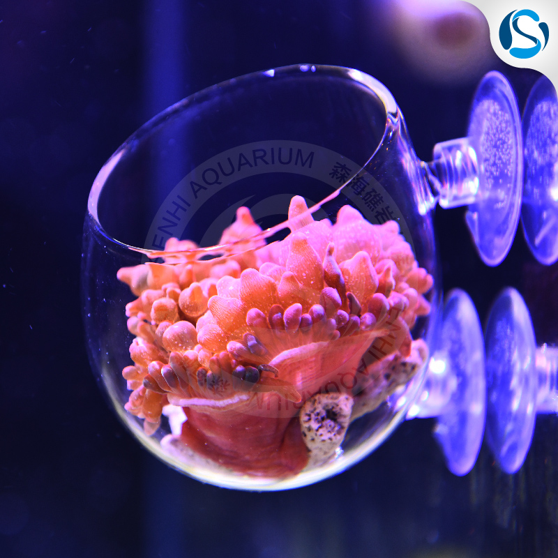 Senhi Biotech Salt Water Anemone Lair Reef Coral Home Lps Cup Anemone Nest Aquarium Accessories font
