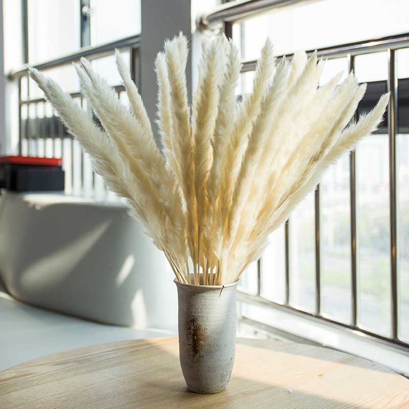 30Pcs WhiteDecorative Dried Plants Pampas Grass Dried Natural Flowers Bulrush Wedding Flower BunchNatural Phragmites Communis