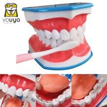 Стандартный обучающая модель для изучения на Структура полости рта и зубов стоматологические развивающие демонстрационный инструмент для...