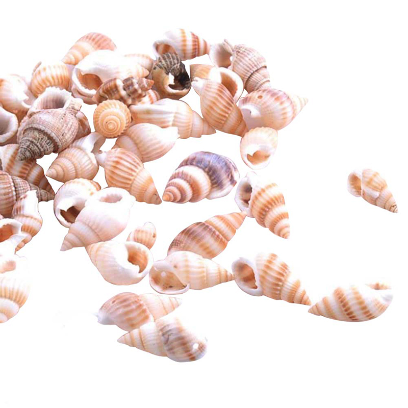 Natural Conch Aquarium Decoration Home Decor Sea Beach Conch Seashells For DIY Crafts 100PCS
