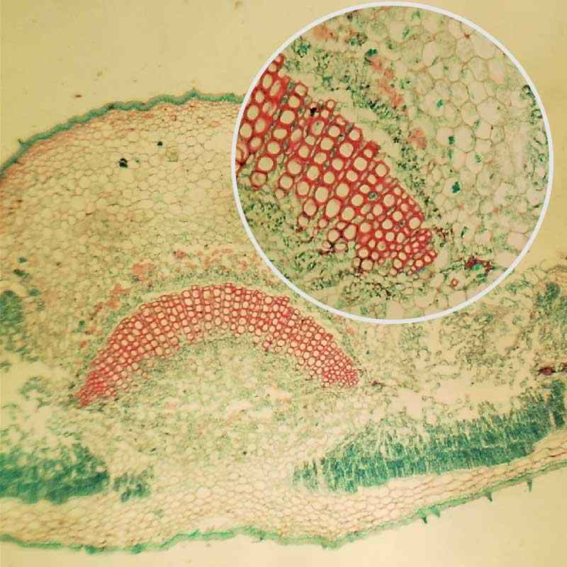 100 Uds profesional rebanada de vidrio prepared slides para microscopio espécimen educativo secciones de tejido humano con caja de plástico