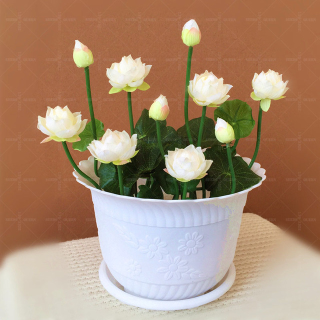 5pcs Lotus Flower Pot Home Garden