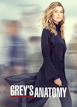 实习医生格蕾 第十六季