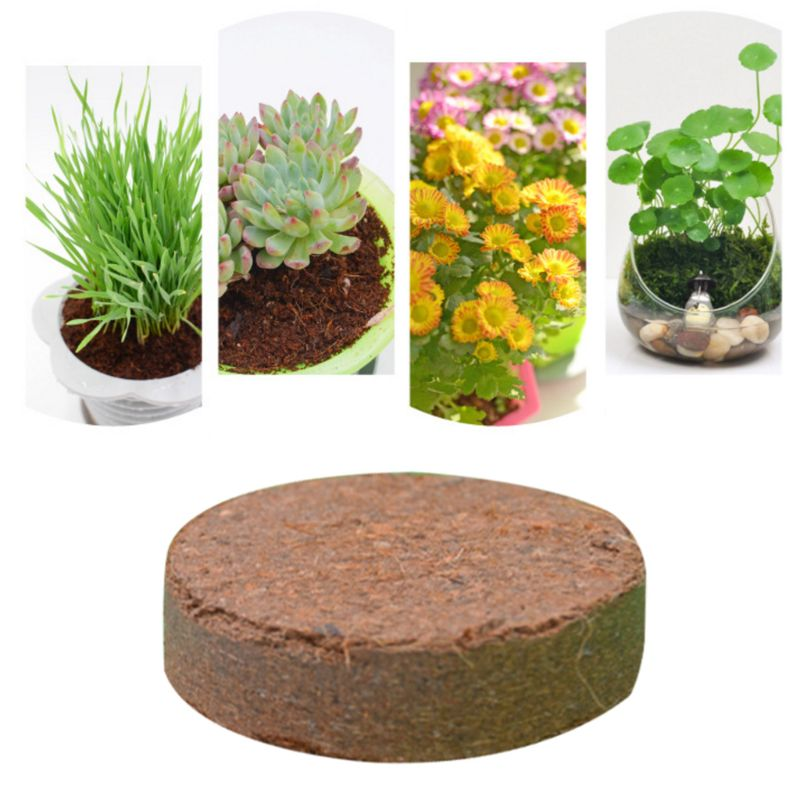 Natural Coconut Fiber Substrate Bricks Soil Essentials For Reptile Terrariums