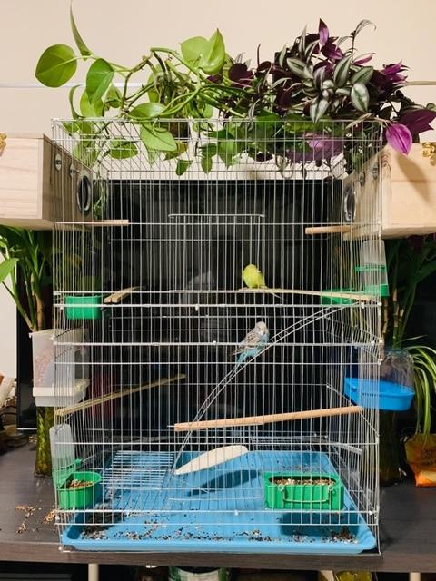 Large Bird Cages for Parrots Parakeet Octopus Metal Birdhouse Heightened Breeding Cage Bird Kages Bird Nest Pigeon Supplies 2