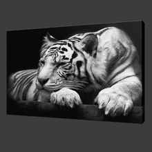 White Tiger Canvas Painting on The Wall Wild Animals Posters and Prints Wall Art Decorative Pictures for Living Room Home Decor human organs anatomy chart posters and prints canvas art decorative wall pictures for living room home decor unframed painting