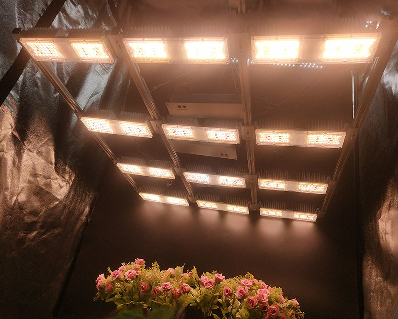 Shenzhen Customized Full Spectrum Uv Ir 16 Modules 800w High Ppfd Led Grow Light For Medical Plants