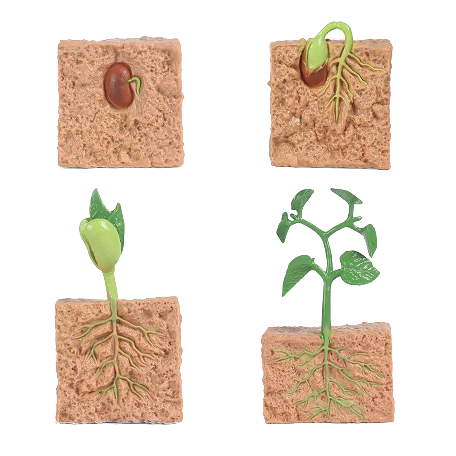 Kids Plant Seeds Growth Life Cycle Playset Cognitive Toys Teaching Aids 6