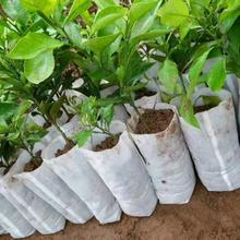100Pcs Non-woven nursery bags plant grow bags 20*22cm Degradable Seeding Nursery Bags Pots Seedling Raising Bags Garden Supplies