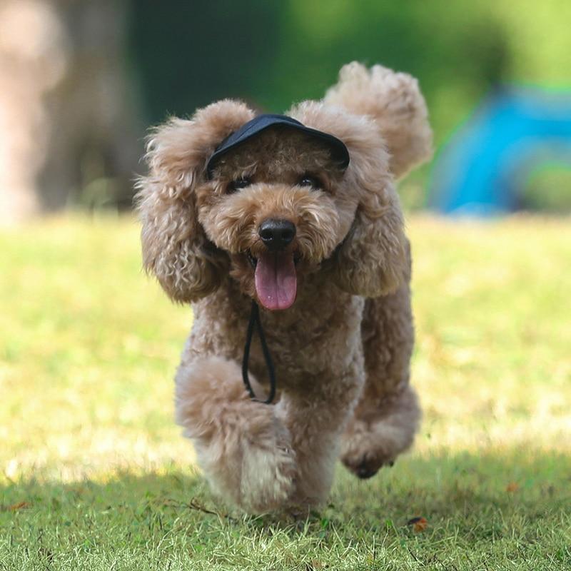 Casquette d'été visière pour chiens