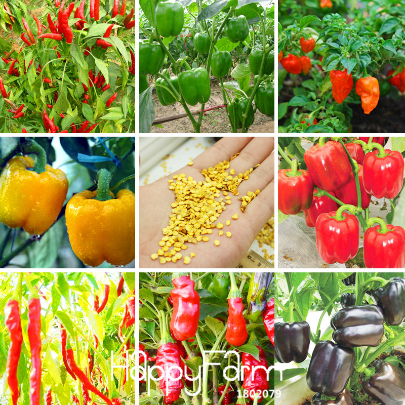 Best-Selling!100 PCS/Bag 13 Varieties Of Garden Vegetables And Red Yellow Green Purple Black White Pepper Bonsai