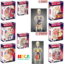 4d Human Body Torso Reproductive System Kidney Head Nerves Skin Anatomical Model Medical Supplier Teaching Puzzle Assembling Toy