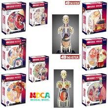 4d 人体胴体生殖システム腎臓ヘッド神経皮膚解剖モデル医療サプライヤー教育パズル組立おもちゃ