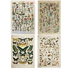Vintage Poster Wall-Stickers Mushrooms Encyclopedia Insect Butterfly Millot Herbs Flowers