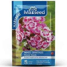American Heirloom MARSEED Mixed Dianthus Flower  Seedsplants Seedling Garden Outdoor