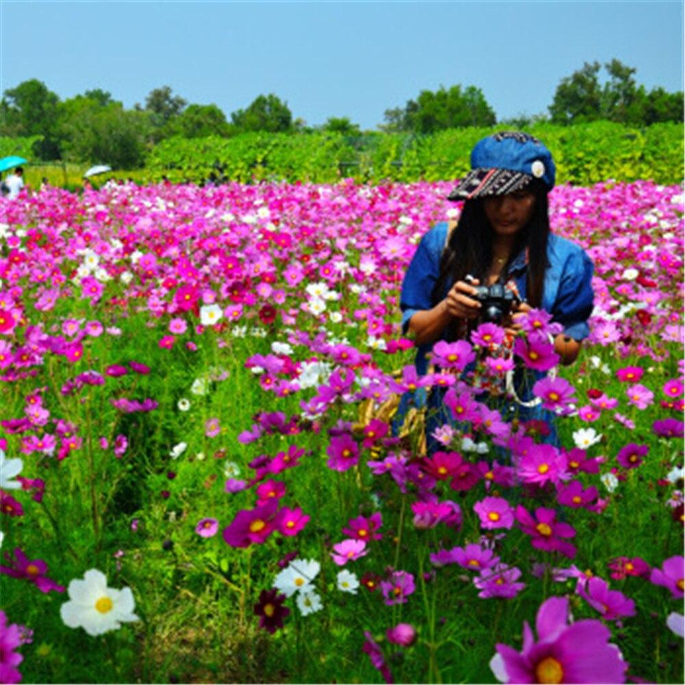 110Pcs/lot Fresh Gold Flower Plant Bath Salts Colorful Pink Blue Chrysanthemum Essence MLXH-16-B