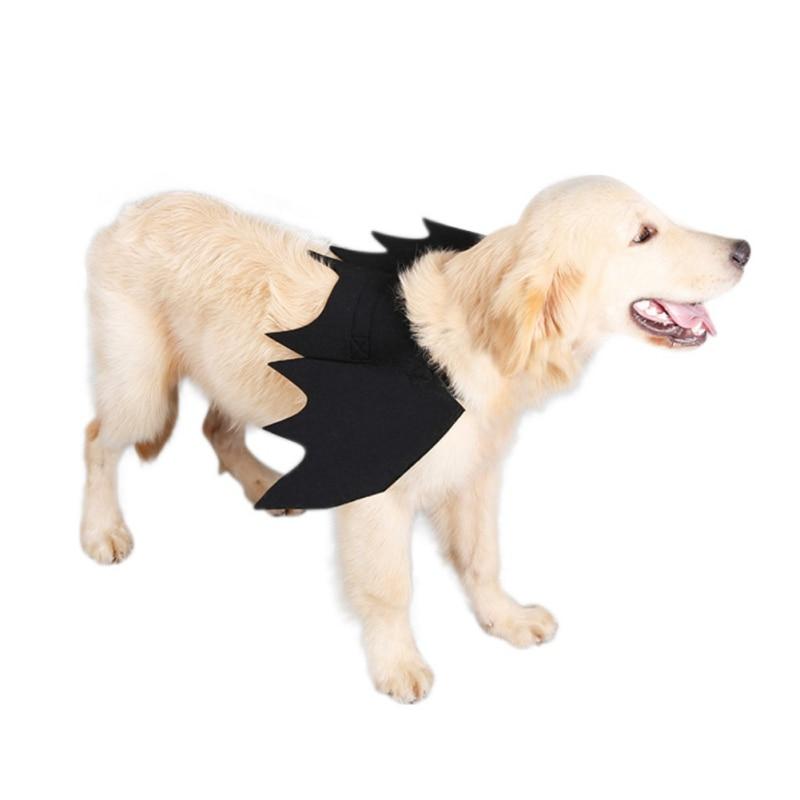 black cat bat costume