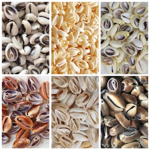 Free Shipping(50pcs/lot)6 Styles Natural Cut Cowrie Shells Beads Natural Shell Cowrie Tribal Jewelery Craft Accessories DIY