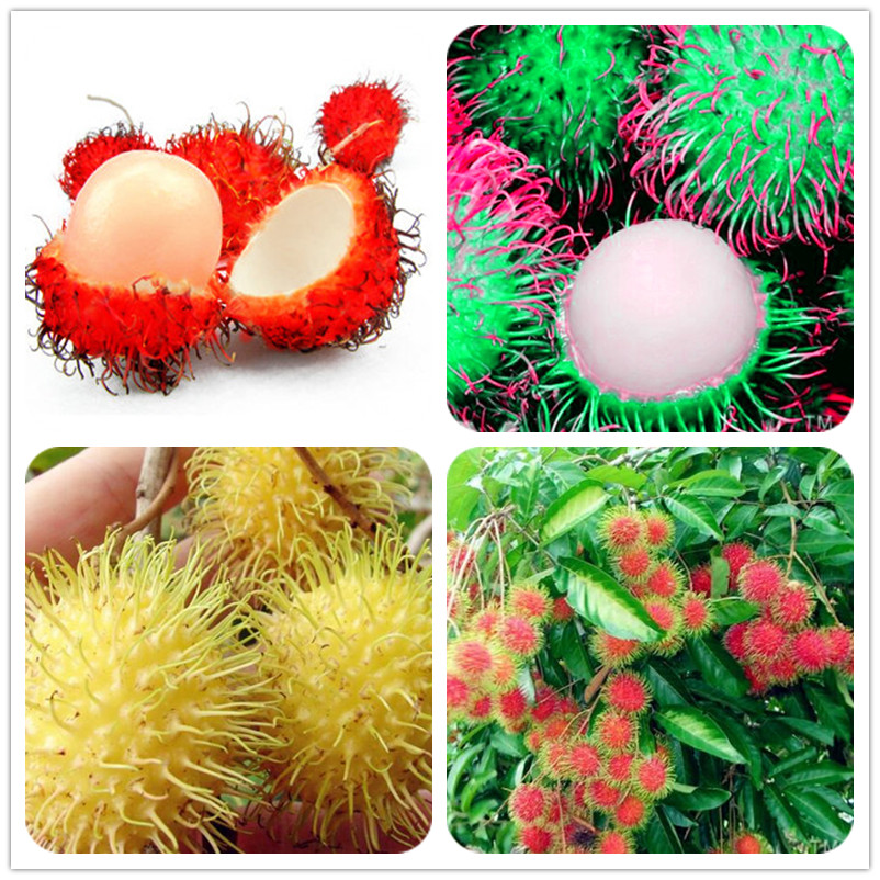 50 Pcs Mixed Rambutan Bonsai, Malaysia Miracle Delicious Fruit Tree,Sweet Giant Plant Tree Plant For Home Garden Gift For Kids