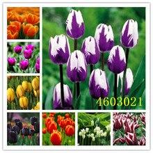 Промотирование потери денег 200 шт тюльпан бонсай тюльпана цветок красивый Tulipanes цветок растение для садовых растений цветок символизирует любовь