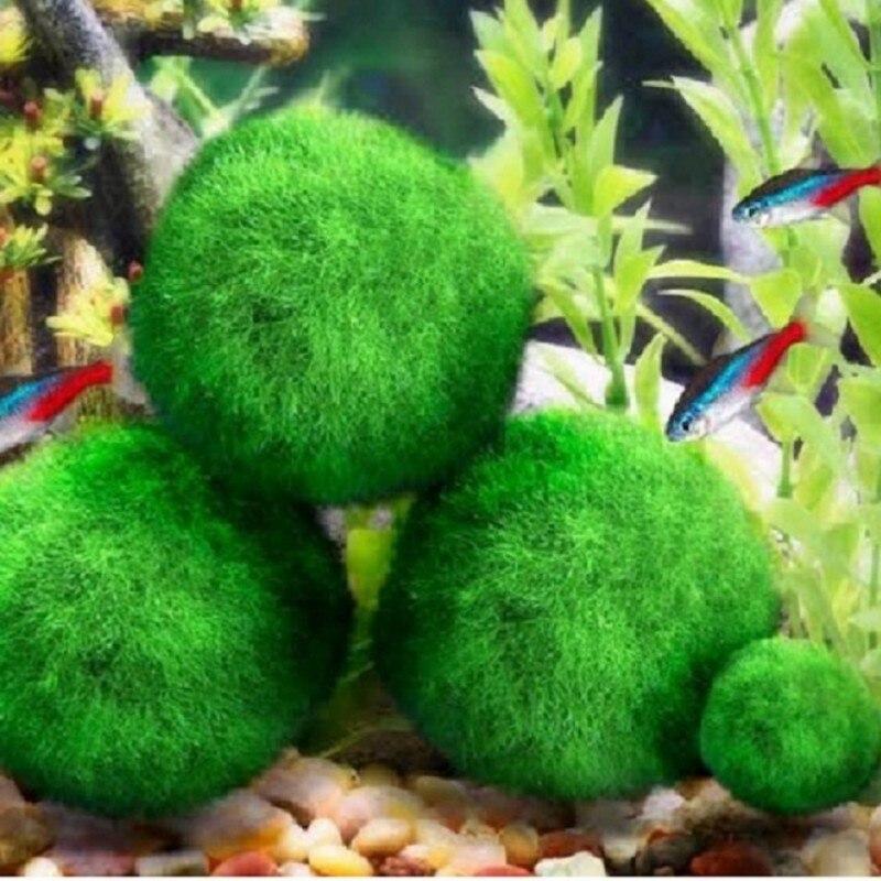 Mini Aquarium plante Aquarium crevettes Nano pour MARIMO Premium qualité mousse boules Aquarium ornement Decoration1