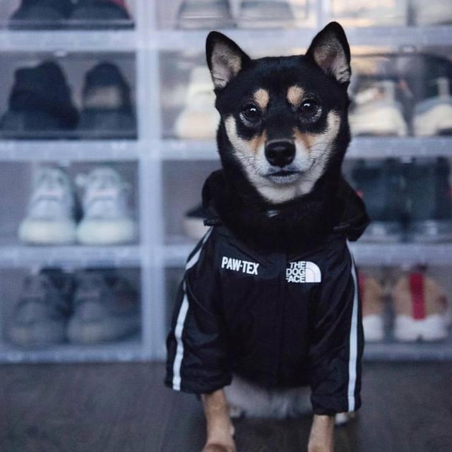 Dog Face Windbreaker Sport 5