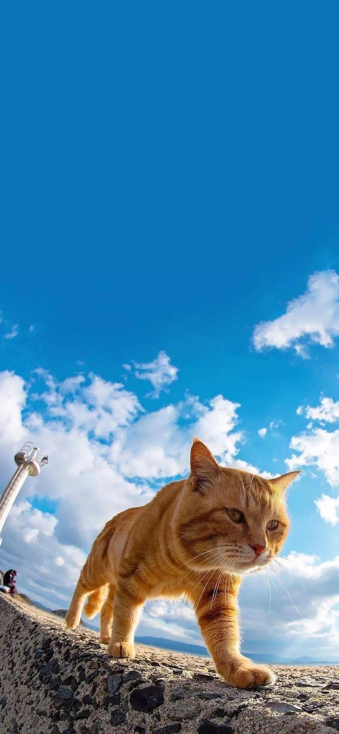 萌猫猫片,霸气喵星人:谁敢挡道?插图13