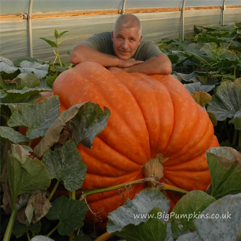 20pcs/ Giant Pumpkin