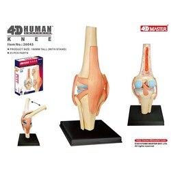 4D Anatomisches Modell der Menschlichen Kniegelenk Organe Medizinische Lehre Puzzle Montage Spielzeug DIY Wissenschaft Popularisierung
