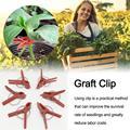 100 sztuk ogórek arbuz winorośli zapięcie związana klamra Hook roślin warzywa klipsy do szczepienia szklarnia rolnicza dostaw 1.8|Taśma do szczepienia roślin|Dom i ogród -
